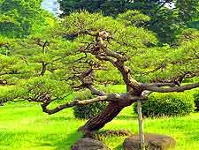 Photo of the beautiful Kyu-Shiba-Rikyu Gardens