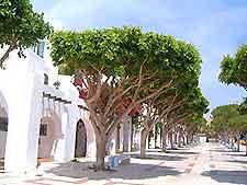 Greenery along La Carihuela
