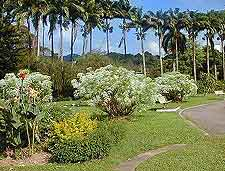 Photo of the island's tropical Botanic Gardens