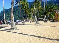 Photo of palm trees on Maracas Beach