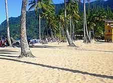 Photo of palm trees on Maracas Beach