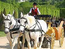Horse and carriage ride photo, taken in the summer season