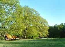 View of the Kampinos National Park (Kampinoski Park)